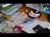 Попугай в ОК цирка-4